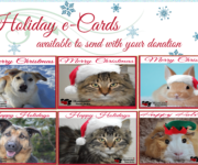 Are you looking for the perfect gift this holiday season?  Send them a Holiday E-card or a printed card through us and make a donation in their name!  You will be letting them know that you […]