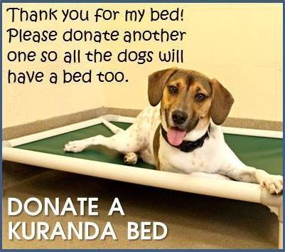 http://kuranda.com/donate/4682