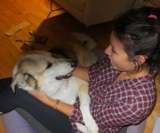 Hi there, I wanted to tell you about our dog, Koda, that we got last February.  She was a stray that was taken in by your humane society. She is the most amazing dog – […]