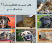 Celebrate a person or a pet's birthday or send a card in memory of a loved one, whethera person or pet, who has passed away. Itis a thoughtful way to acknowledge their life and to […]