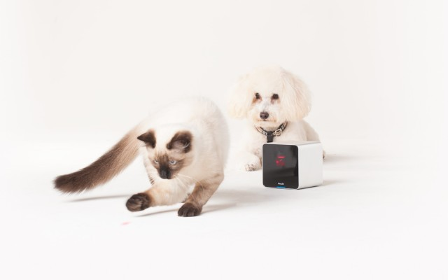 The Timmins Humane Society is thrilled to announce that we have partnered up with Petcube! Petcube is an interactive Wi-Fi Pet camera; with real-time video and built-in laser pointer, anyone can watch, talk to, and […]