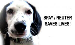 Does Neutering Make Dogs Live Longer